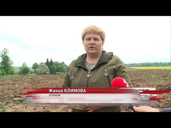 Посевная в разгаре какие культуры будут выращивать в этом году на Ярославской земле