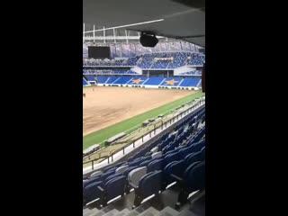 На стадионе динамо сняли умерший газон (не прошло и полутора месяцев).