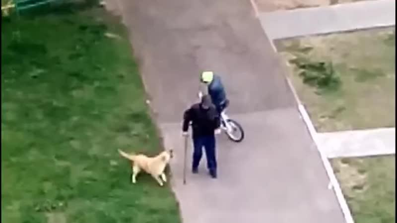 Нападения собак на людей.