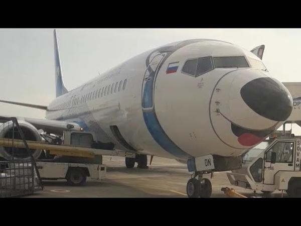 Boeing 737 800 Лайка на носу международный аэропорт Красноярск