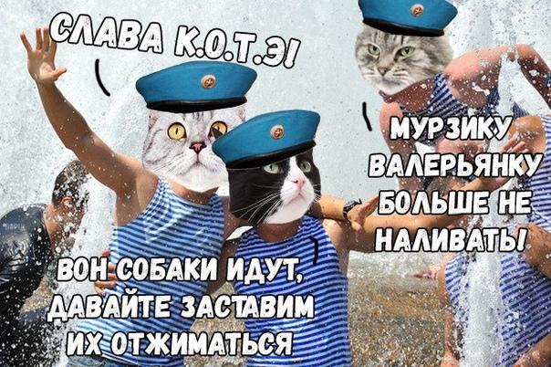 8 августа - Всемирный день кошек
