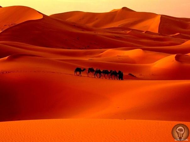 Палеонтологи: Сахара была морем, где жили гигантские сомы иморские змеи