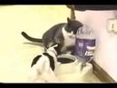Кот и пес борьба за миску