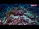 Antalya'da Dünyanın En Eski Gemi Batığı Bulundu