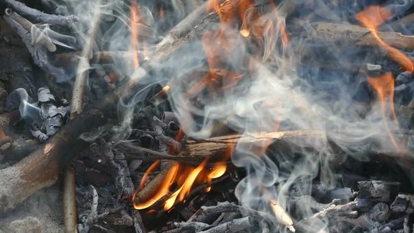 Лесная охрана обращает внимание, что в условиях особого противопожарного режима, установленного на всей территории Московской области, запрещено любое использование открытого огня, в том числе костры и мангалы