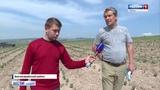 Крымская лаванда под угрозой