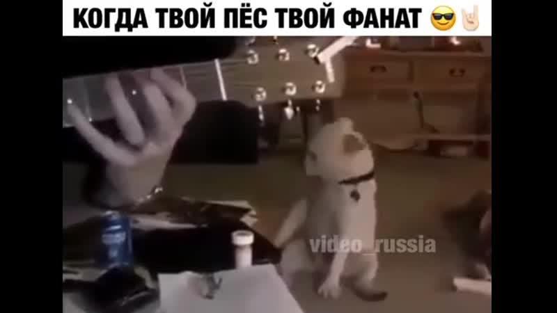 Когда твой пес, твой фанат
