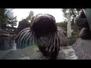 Sea otters take a swim in the seal pool