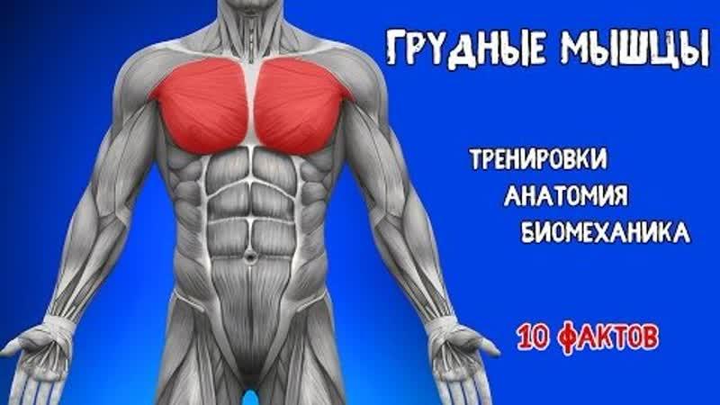 ГРУДНЫЕ МЫШЦЫ. 10 ФАКТОВ. Биомеханика, Тренировки, Анатомия