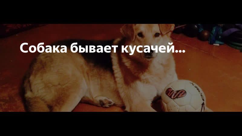 Какую собаку вы считаете опасной