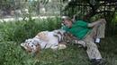 2 Василиса главная тигрица Тайгана Vasilisa is the main tiger of Taigan YouTube