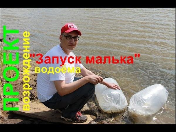 Проект Возрождение водоема №2 Запуск малька карпа 140000 шт