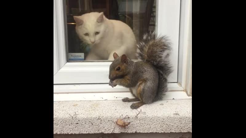 Невозмутимая белочка и грустный котик.
