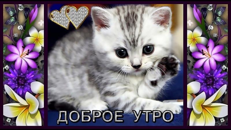 ДОБРОЕ УТРО(музыкальное видео с пожеланиями доброго утра)