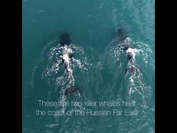 Китовая тюрьма под Находкой - ролик Гринпис