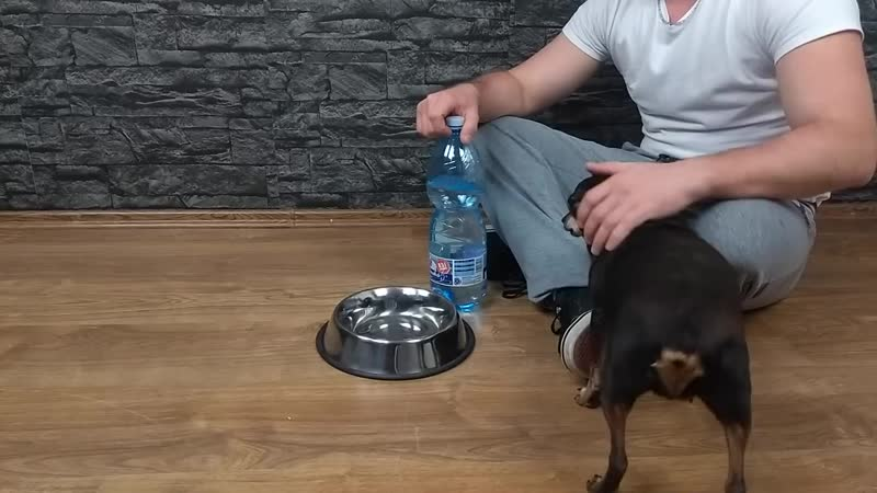 DIY Puppy Dog Water Dispenser at Home.mp4