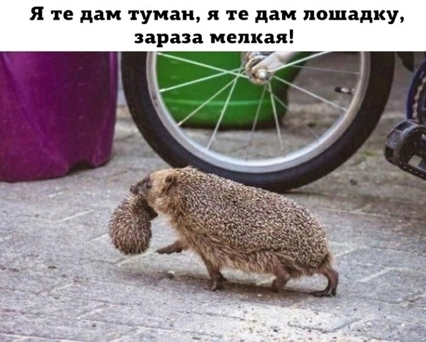 https://pp.userapi.com/c855028/v855028651/6cac5/-AY8otK9Zm8.jpg