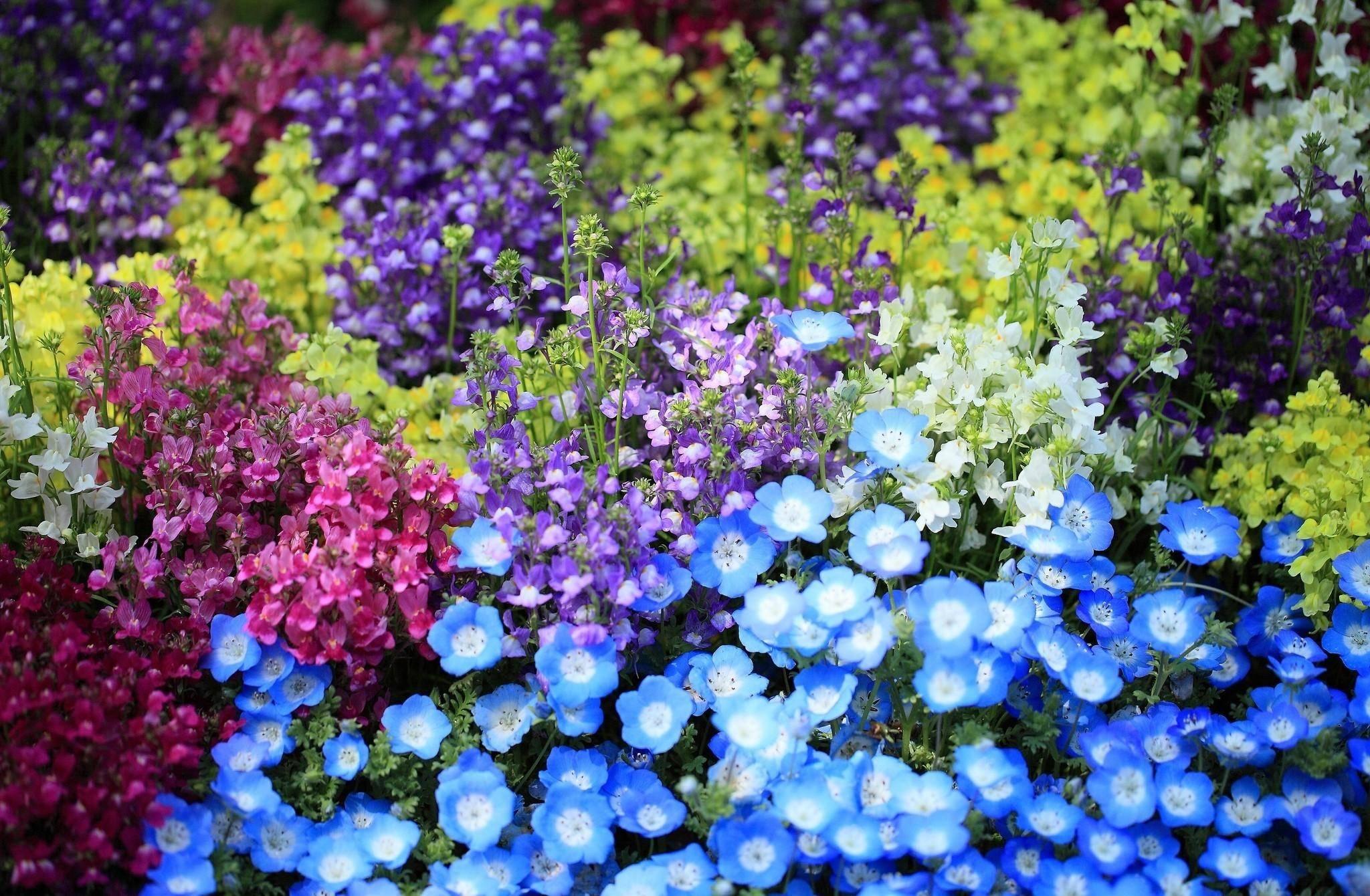 Посевной календарь огородника и садовода на июль 2019🌸 Благоприятные дни для посадок 🌸