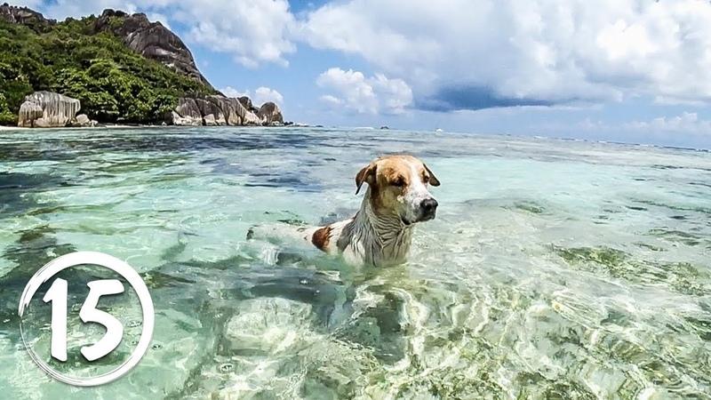 Остров Ла Диг Сейшелы Самый фотографируемый пляж в мире