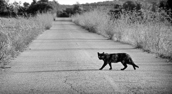 Что делать, если черная кошка перебежала дорогу: меры защиты