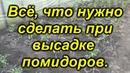 Высадка помидоров в теплицу. Мастер-класс от канала Сад, огород, своими руками!