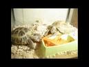 Кормление черепах морской свинки рыбок и птиц