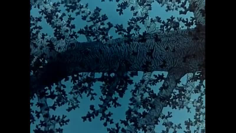 6 - Одиссея Жака Кусто - Мир без солнца
