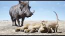 Король Лев / The Lion King - отрывок №3 Мы назовем его Фред