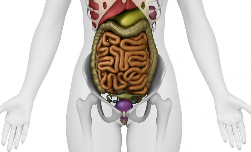 Хотя инвазивная аденокарцинома может поражать ряд органов, она обычно развивается в толстой кишке или легких.
