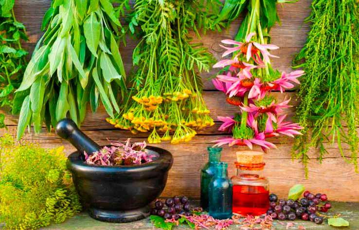 Обзор видов лекарственных трав