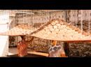 Живой потолок 🖤 Крутая кинетическая штука открылась в Нью-Йорке. news/studio_ini/