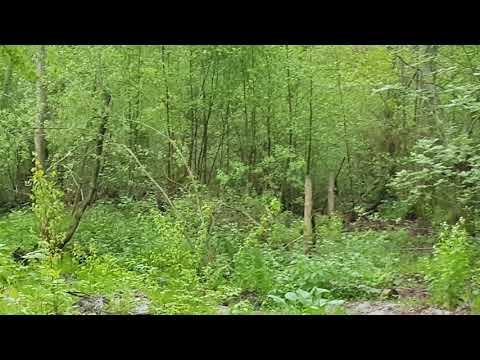 Встреча с кабаном в лесу! Когда эмоции переполняют D Куршская коса, Калининград, Россия