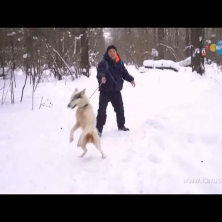 Питомник ездовых собак Северный