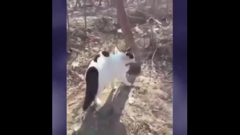 Но тут из лесу кодло кошек подвалило и псу такой вломило )