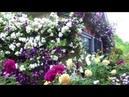 Райский сад на 5 сотках Уникальная коллекция роз на маленьком участке