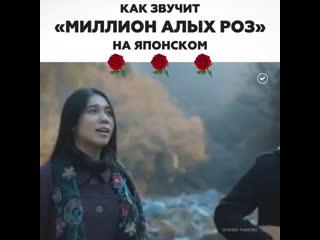 «Миллион алых роз» на японском