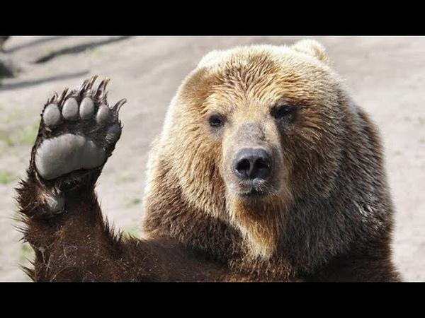 В Снежинске ждут пробуждения медведя, уснувшего рядом с городом