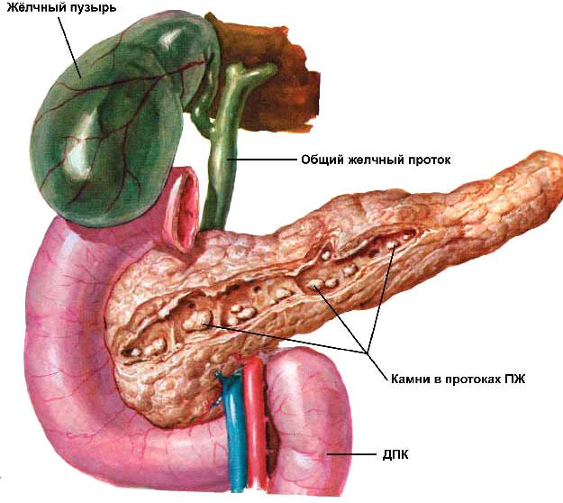 Каковы различные типы панкреатической диеты?