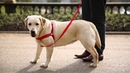 Easy Walk® Dog Harnesses - Train your dog. Enjoy your walk.