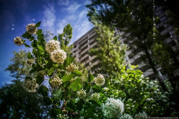 Как жила Припять в последний свой день роковые ошибки Это был обычный весенний день. На дворе светило уже тёплое апрельское солнце. 26 числа с утра в Припяти уже распространялись слухи о