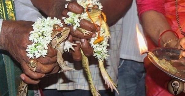 Сотни индийцев присутствуют на свадьбе двух лягушек. В течение трех последних недель жители Индии страдают от засухи и невыносимой жары, которая уже оказалась смертельной для 76-ти человек. В