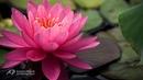 ♥GIOVANNI MARRADI - Because I Love You - On Herring Pond♥