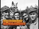 Как выглядят спустя 50 лет главные герои сериала Четыре танкиста и собака