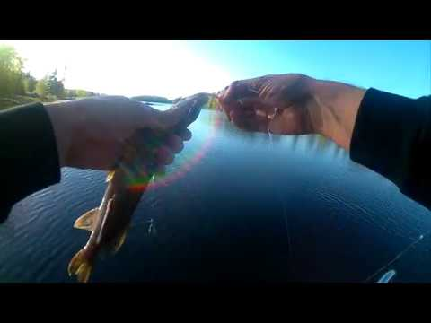 Micro jigging for a few different fish