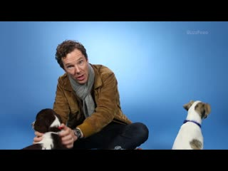 Benedict_cumberbatch_plays_with_puppies_while_answering_fan_