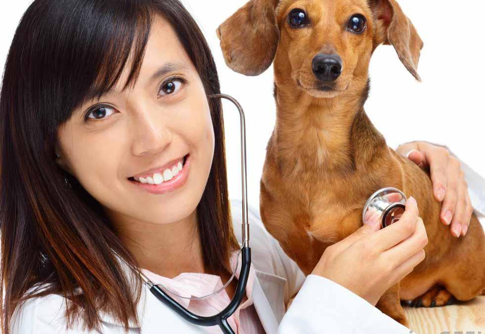 Ветеринарные фармацевты должны разбираться в физиологии животных, чтобы они могли назначить правильный вид лекарств.