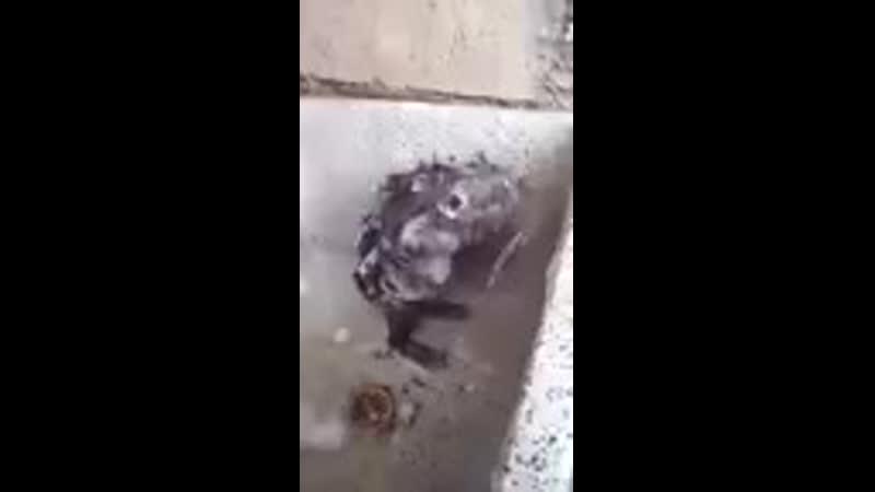 Rata lavándose igual que una persona ( 144 X 80 ).mp4