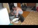 Русские настолько суровы, что медведи вынуждены помогать им по хозяйству! также заморские мишки