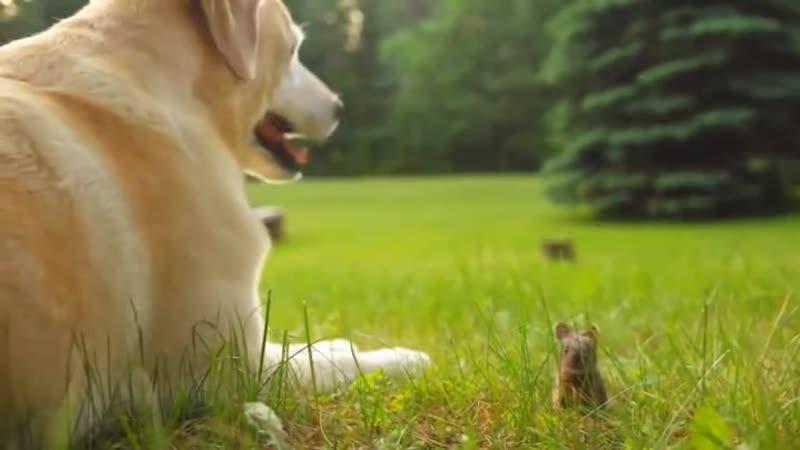 Ля ля какие милашка! Волчара крол