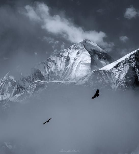 Выше только звезды Дхаулагири (8167 м)Фото: Александр Чазов